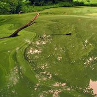 Planktonic-Algae-2