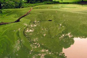 Green Pond Scum